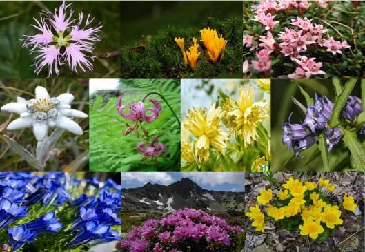 Caleidoscop flori Retezat